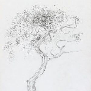 1973: Motivo vegetale | Bleistift auf Papier (30,1 x 20,8 cm)