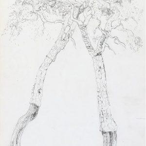 1972: Motivo vegetale | Bleistift auf Papier (26,9 x 21,2 cm)