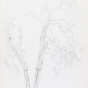 1972: Motivo vegetale | Bleistift auf Papier (29,8 x 20,9 cm)