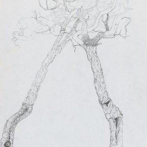 1973: Motivo vegetale | Bleistift auf Papier (29,7 x 20,8 cm)