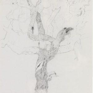 1972: Motivo vegetale | Bleistift auf Papier (29,6 x 20,3 cm)