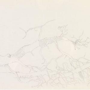 1972: Motivo vegetale | Bleistift auf Papier (20,7 x 29,9 cm)