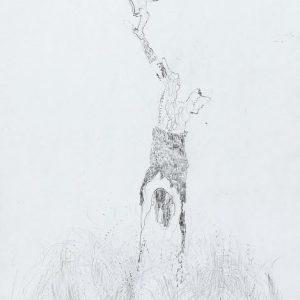 1973: Motivo vegetale | Bleistift auf Papier (30,2 x 20,8 cm)